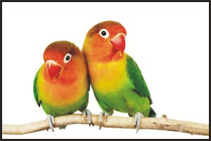 eigthhappybird