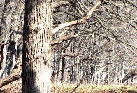 treestoinfinity