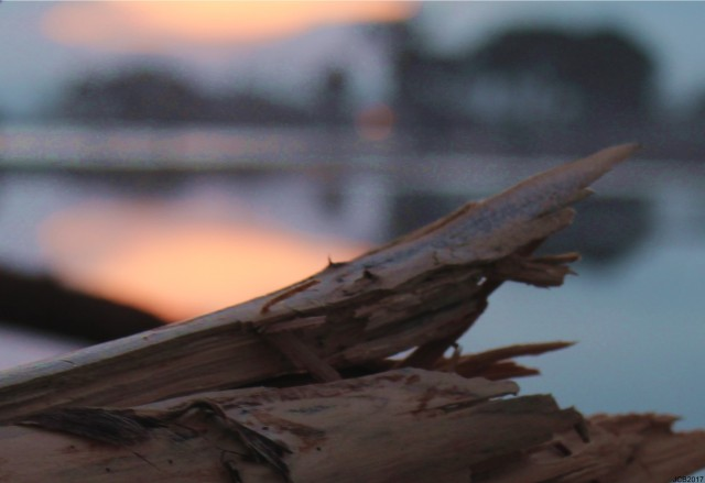 sunsetdriftwood