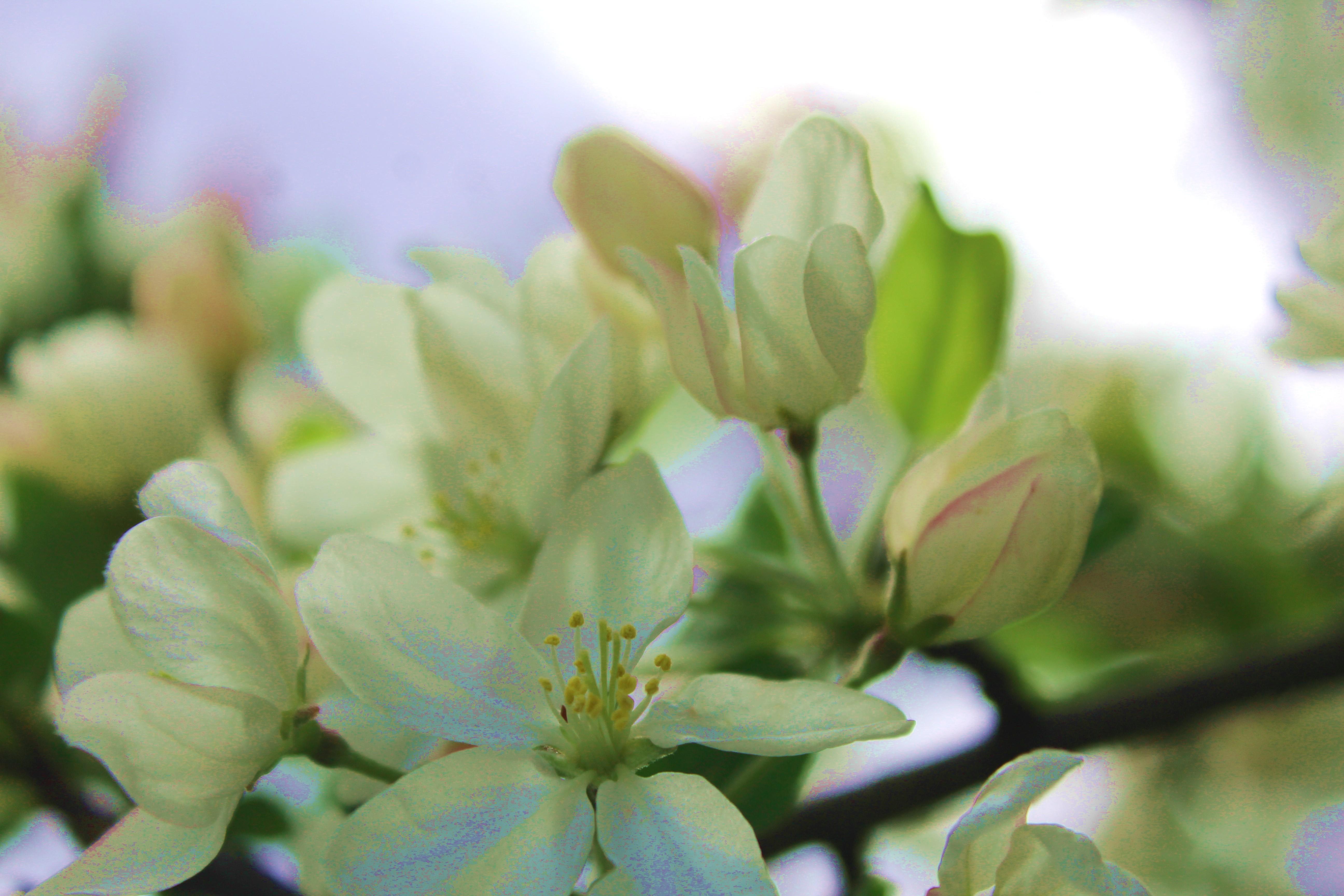 springblooms2
